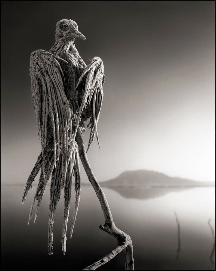 Nick Brandt, Calcified Dove, in Across The Ravaged Land